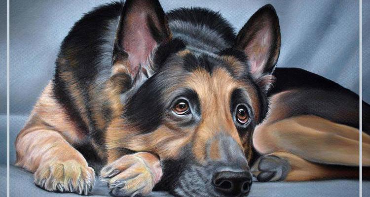 Собака в технике пастель