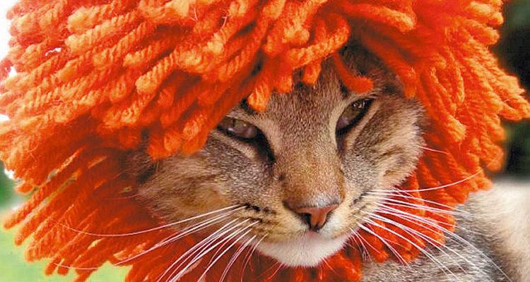Вязаные шапки для котов от Мередит Лангли