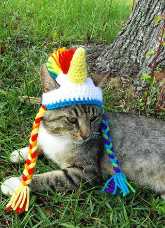 кот, вязание, рукоделие, шапка, вязаная шапка, поделки, поделки своими руками, хендмейд, handmade, шапка для кота
