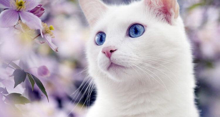 Милые котики на камнях