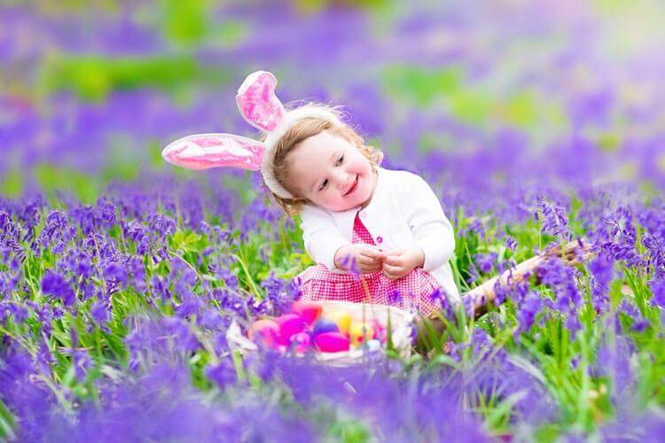 Смешанная гамма цветов: фиолетовая и зеленая гамма