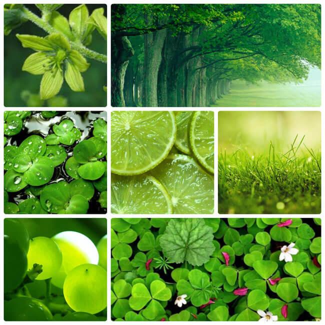 смешанная гамма цветов, цвет, цветоведение, дизайн, колористика, искусство, зелёный, фиолетовый, оттенки, сочетание цветов