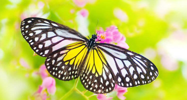 Как сделать бабочку в технике квиллинг